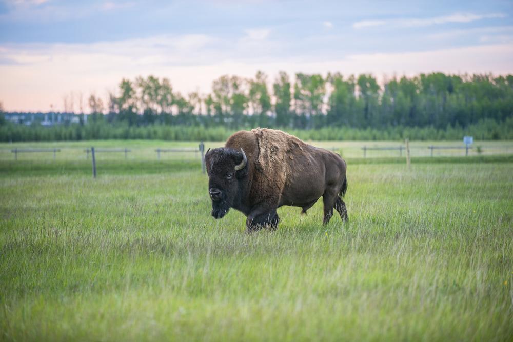 Rocky Mountain House Cowboy Trail Alberta