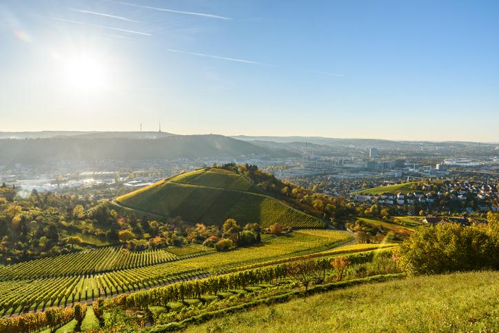 Stuttgart Wine 1