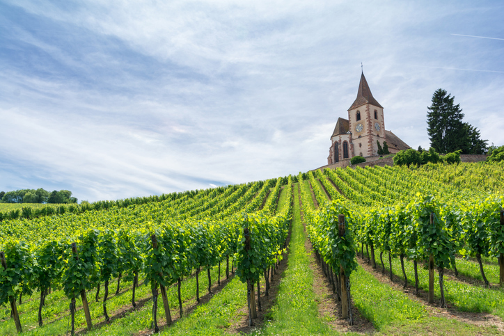 Vineyard Alsace