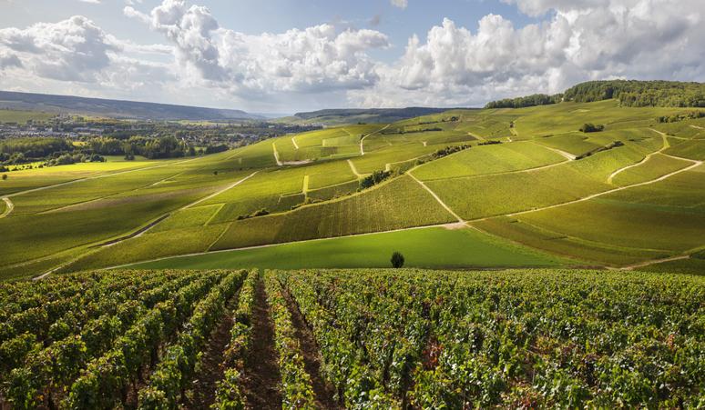 W Ine Burgundy 2