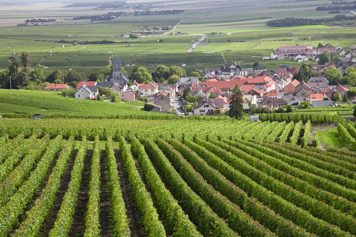 W Ine Burgundy 3