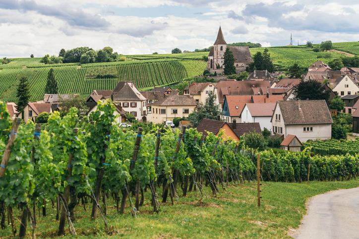 W Ine Burgundy