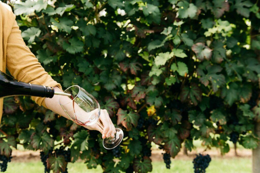 Abbotsford Winery 1