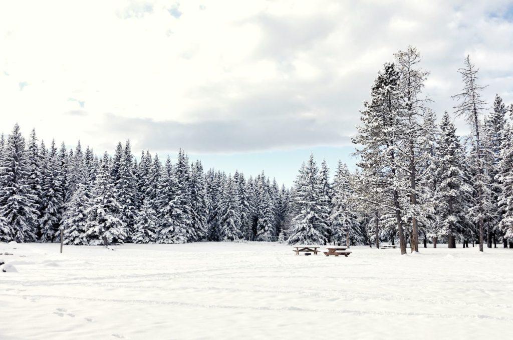 Bragg Creek Provincial Park Image 2