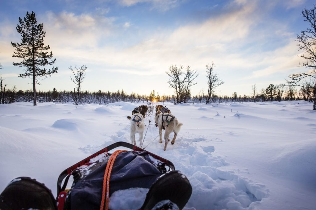 Dog Sledding Thunder Bay