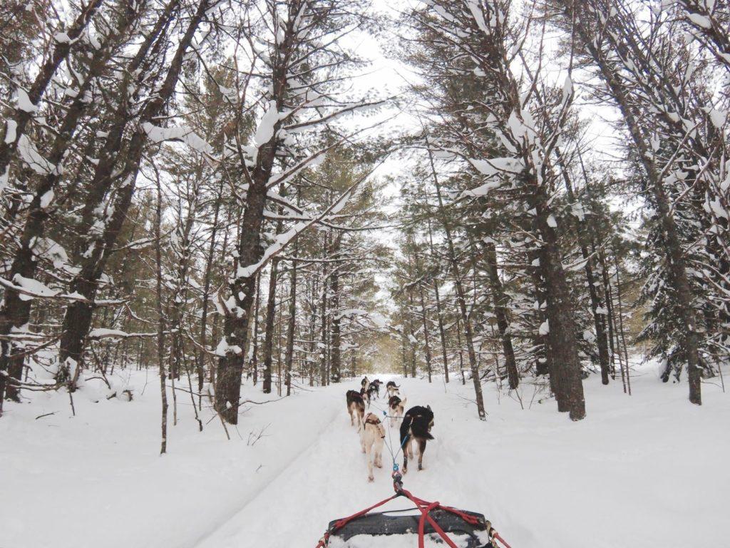 Dog sledding Haliburton 1