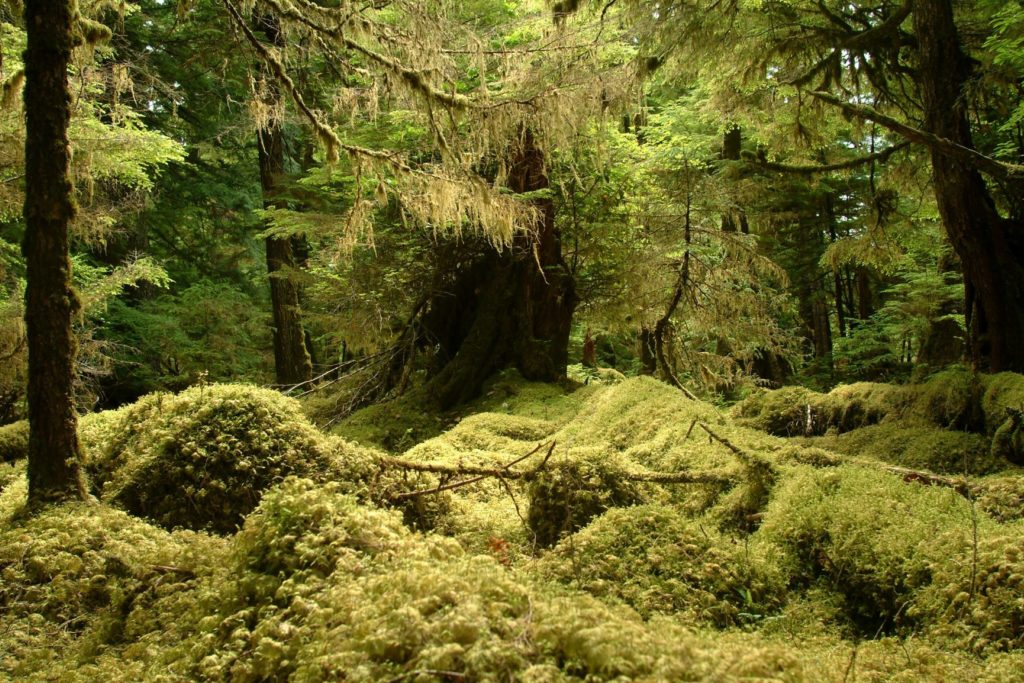 Haida Gwaii Rainforest British Columbia