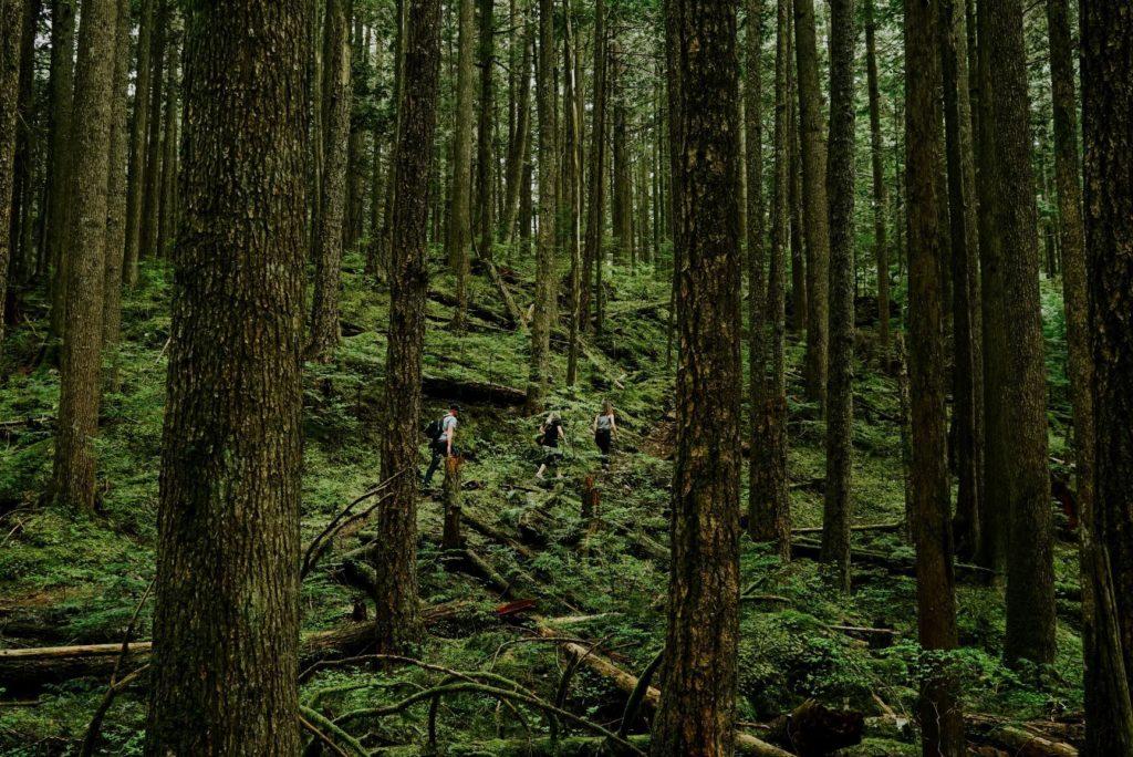 Hiking Sumas 1