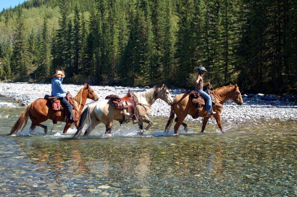 MM Ranch Cowboy Trail Alberta