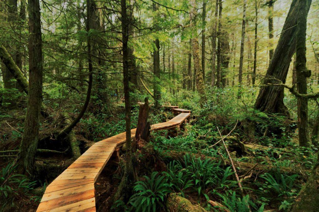 Vancouver Island Trail Mountain Biking in BC