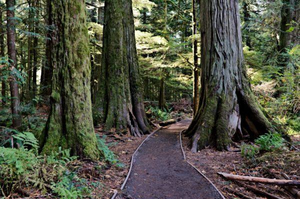 Hiking Trail Vancouver Island