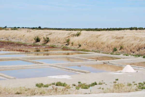 Ile de re salt marshes