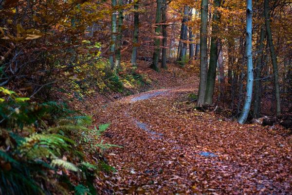 Road in autumn forest Philosophenweg Heidelberg Germany