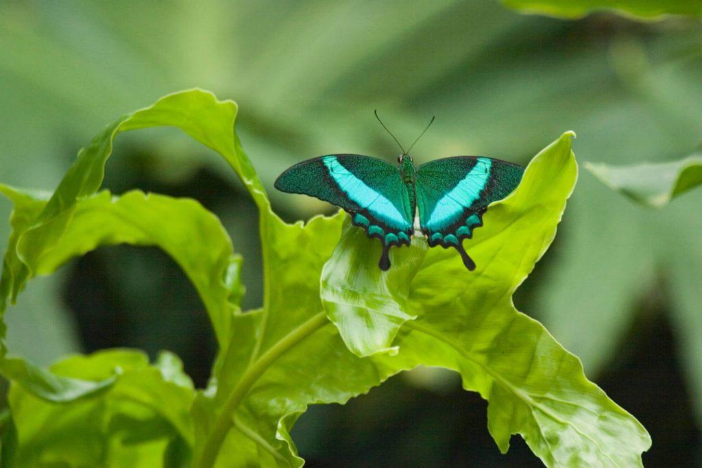 4 Butterfly Conservatory