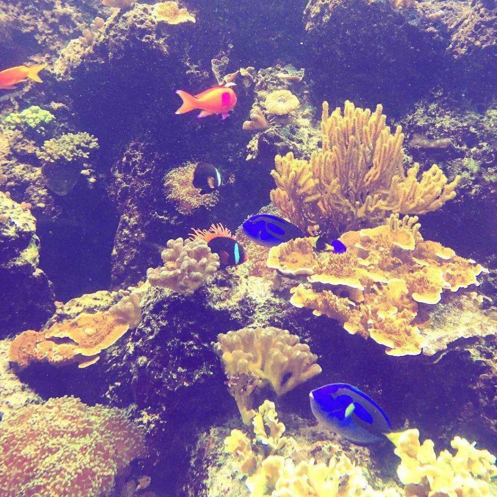 Haus Des Meeres Aquarium © Jofeltham