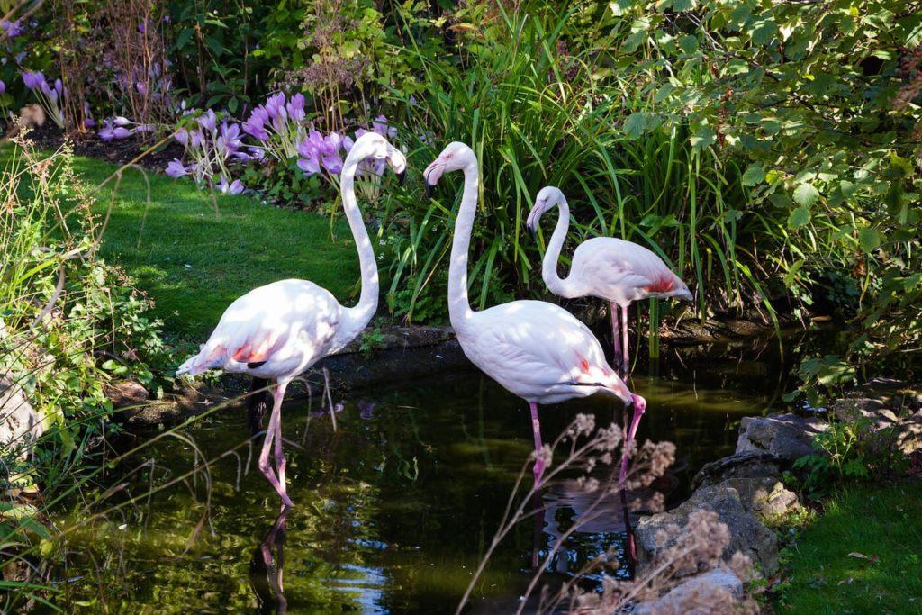 The Roof Gardens Flamingos