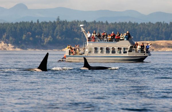 2 Whale Watching