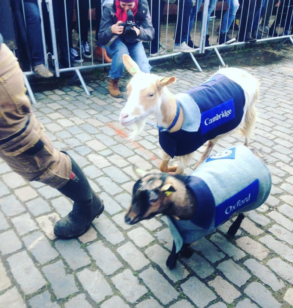 Oxford vs Cambridge Goat Race